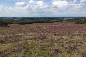 dry heather panorama